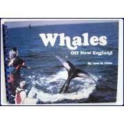 WHALES OFF NEW ENGLAND